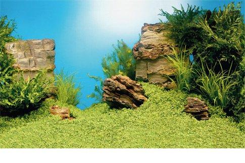 JUWEL Pozadí Poster 1 S, Plant/Reef, 60x30 cm