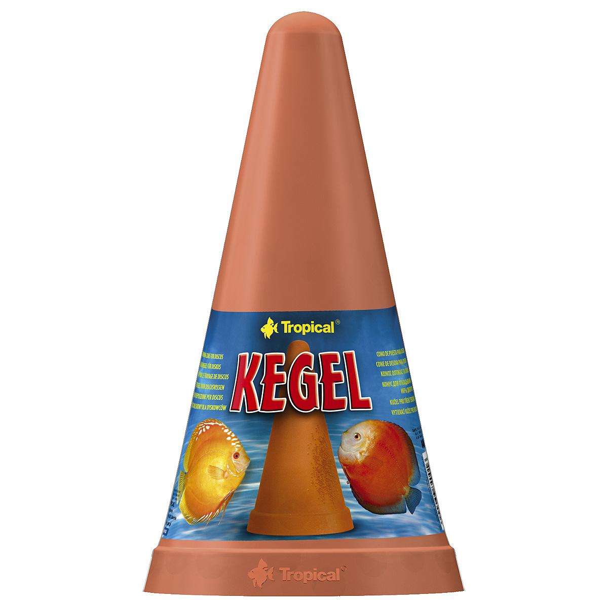 Tropical  Kegel